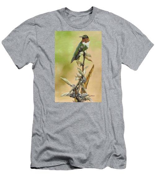 Ruby Throated Hummingbird Study Men's T-Shirt (Slim Fit) by Phyllis Beiser