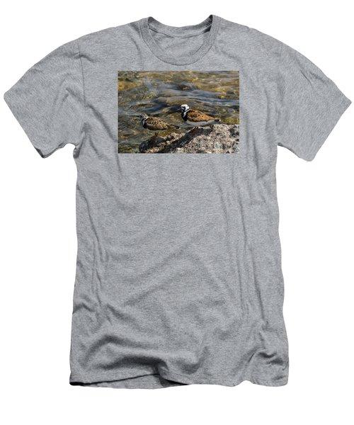 Ruddy Turnstone Men's T-Shirt (Slim Fit) by Dan Hefle
