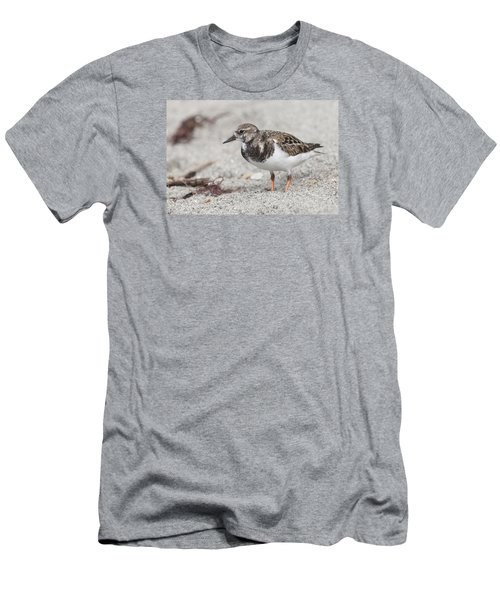 Ruddy Turnstone On The Beach Men's T-Shirt (Athletic Fit)