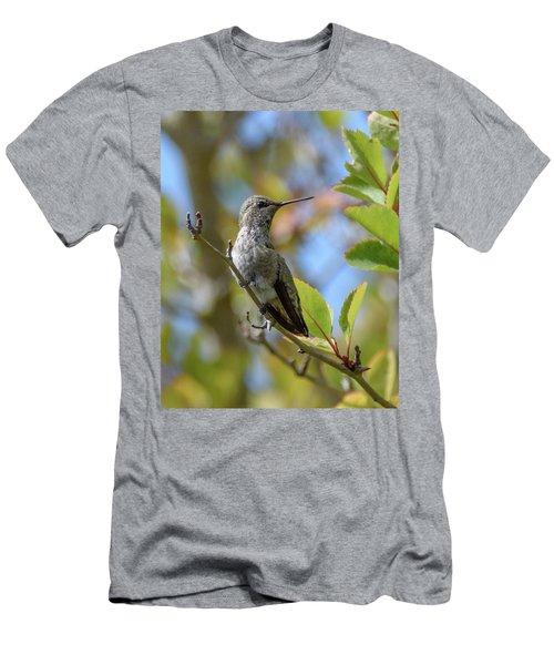 Rufous Hummingbird Men's T-Shirt (Slim Fit) by Keith Boone