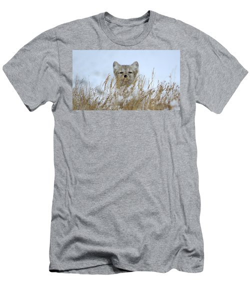 Sachs Harbour Fox Men's T-Shirt (Athletic Fit)