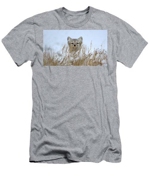 Sachs Harbour Fox Men's T-Shirt (Athletic Fit)