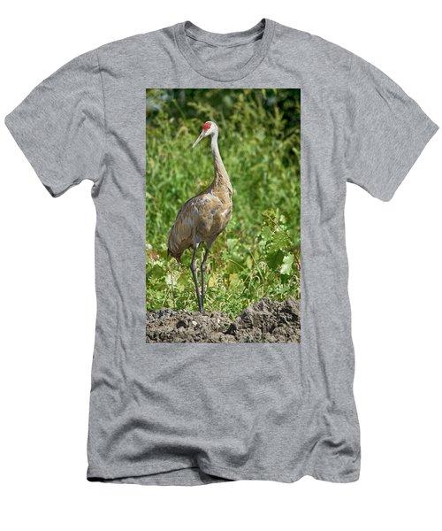 Sandhill Crane Men's T-Shirt (Athletic Fit)