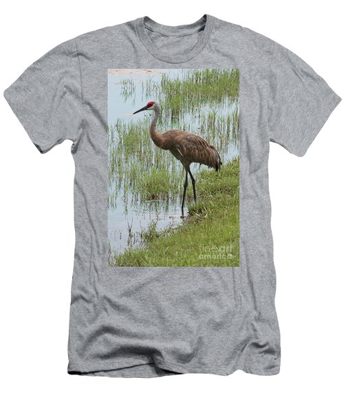 Sandhill In The Marsh Men's T-Shirt (Athletic Fit)