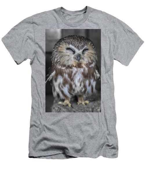 Saw Whet Owl Men's T-Shirt (Slim Fit)
