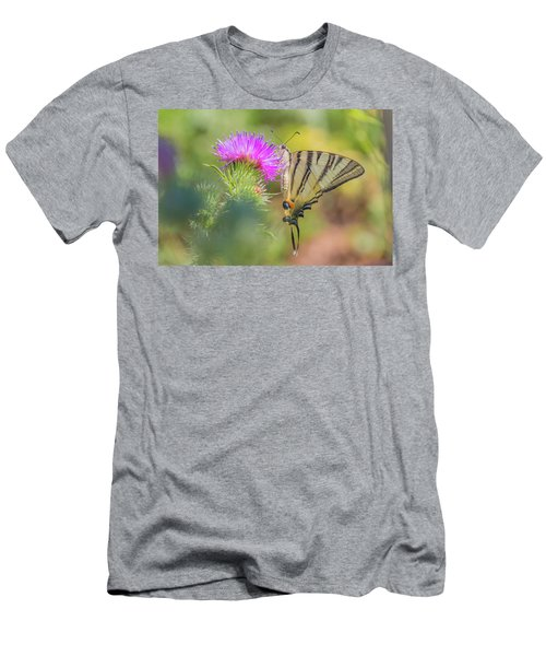 Scarce Swallowtail - Iphiclides Podalirius Men's T-Shirt (Athletic Fit)