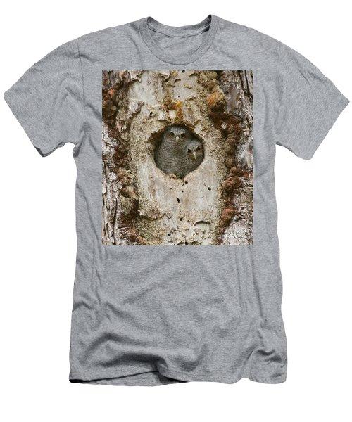 Screech Owl Babies Peeking Out Men's T-Shirt (Athletic Fit)