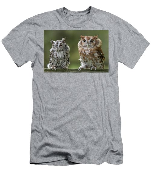 Screech Owl Pair Men's T-Shirt (Athletic Fit)