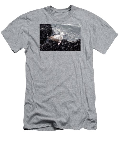 Seagull And Mussels Men's T-Shirt (Slim Fit) by Melinda Saminski