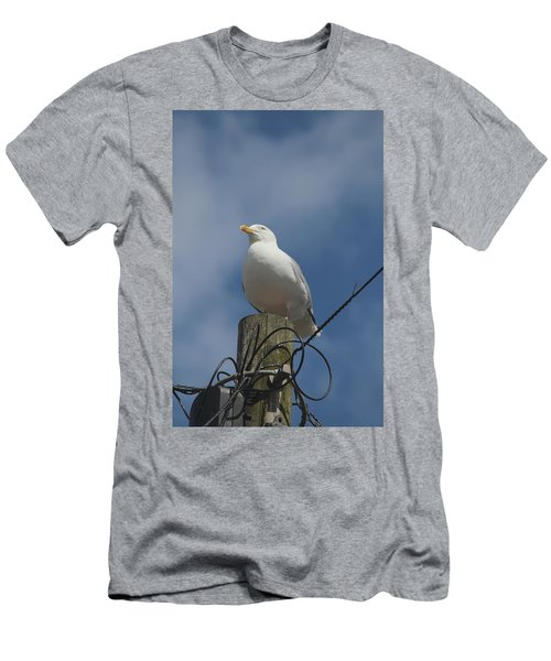 Seagull Perching. Men's T-Shirt (Athletic Fit)