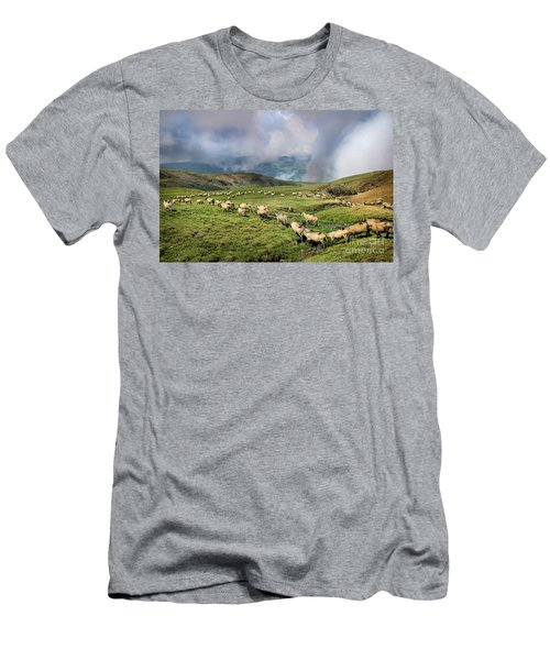 Sheep In Carphatian Mountains Men's T-Shirt (Athletic Fit)