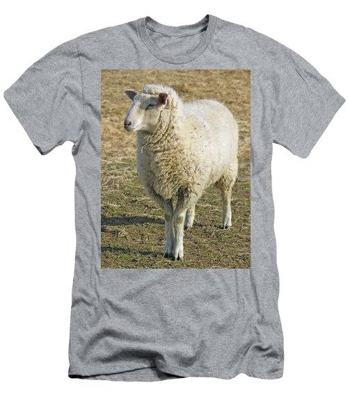 Sheep Men's T-Shirt (Slim Fit) by James Larkin