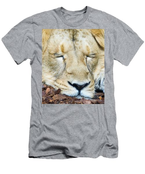 Sleeping Lion Men's T-Shirt (Slim Fit) by Colin Rayner