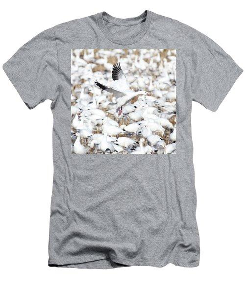 Snow Goose Lift-off Men's T-Shirt (Athletic Fit)