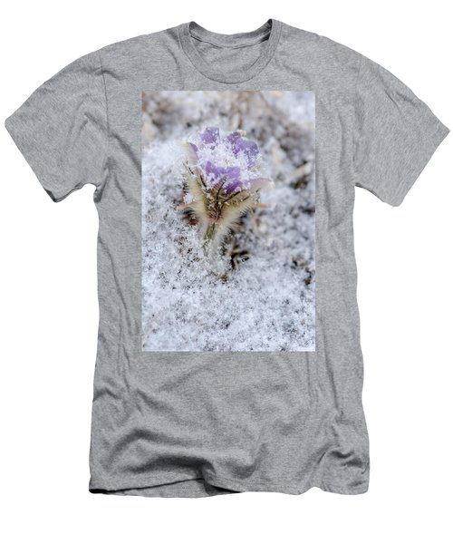 Snowy Pasqueflower Morning Men's T-Shirt (Athletic Fit)