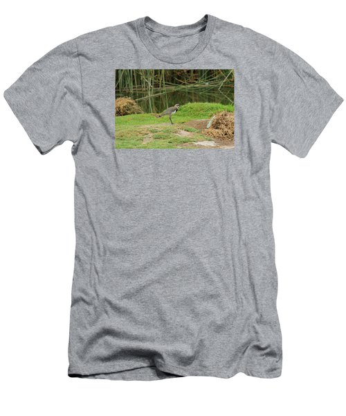 Southern Lapwing On Shore Men's T-Shirt (Slim Fit) by Robert Hamm