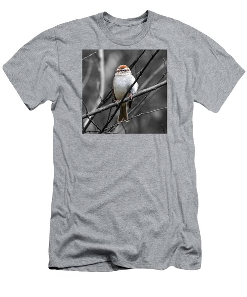 Sparrow Men's T-Shirt (Slim Fit) by Paul Wilford