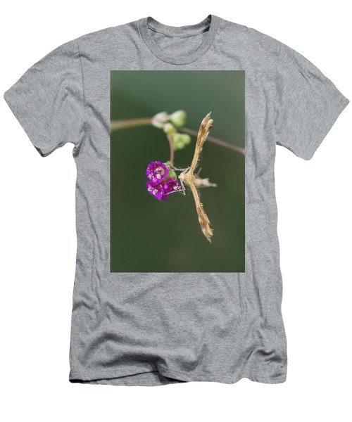 Spiderling Plume Moth On Wineflower Men's T-Shirt (Athletic Fit)