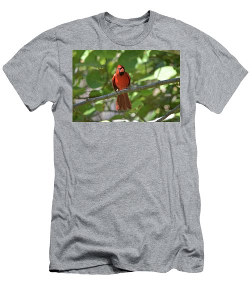 Spring Training Cardinal Men's T-Shirt (Athletic Fit)
