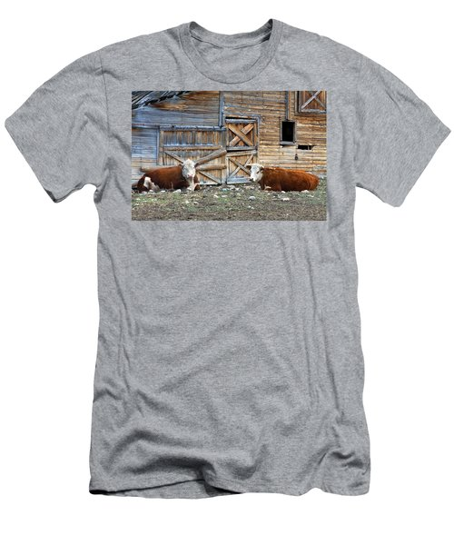 Squires Herefords By The Rustic Barn Men's T-Shirt (Athletic Fit)