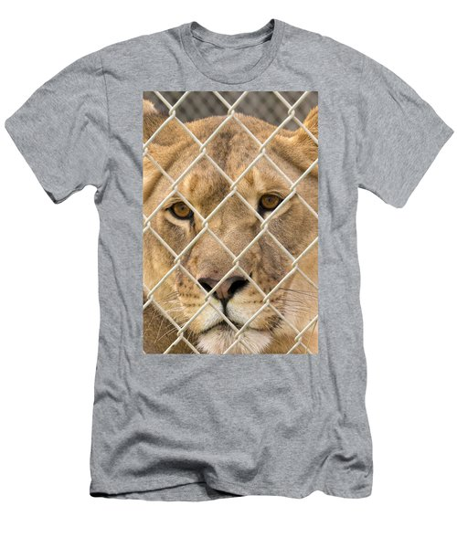 Staring Lioness Men's T-Shirt (Athletic Fit)