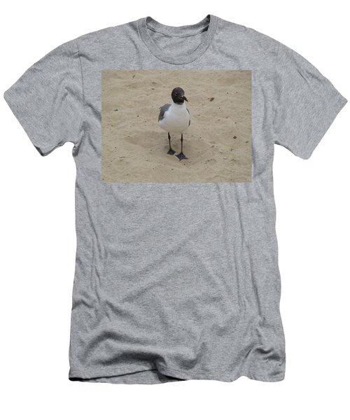 Struttin' Seagull  Men's T-Shirt (Athletic Fit)