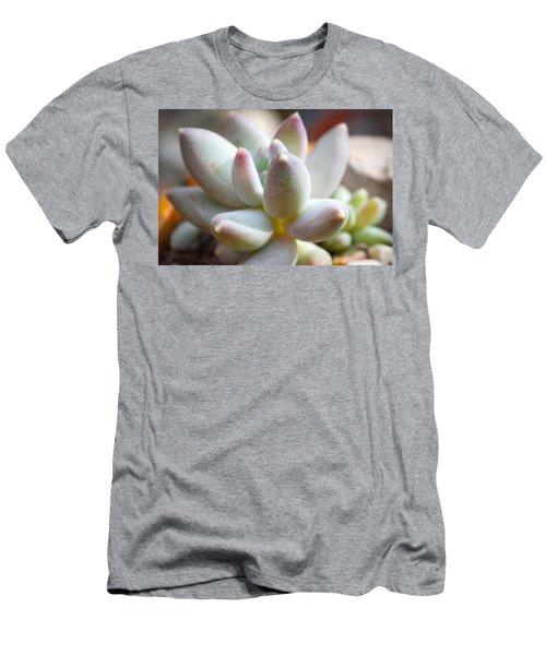 Men's T-Shirt (Slim Fit) featuring the photograph Succulent Cute  by Catherine Lau