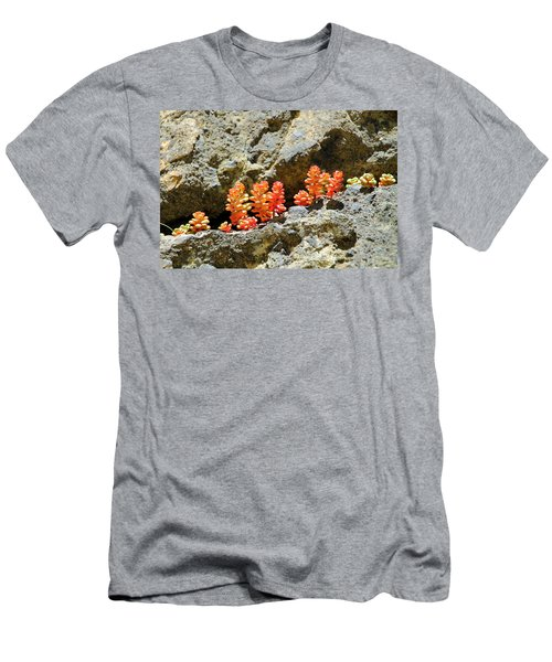 Succulents On The Oregon Coast Men's T-Shirt (Athletic Fit)