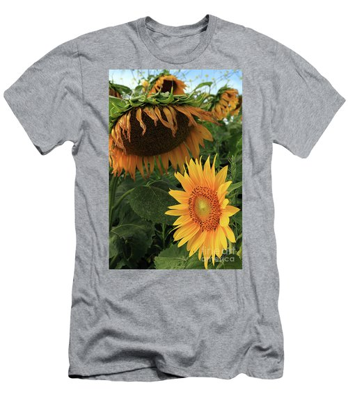 Sunflowers Past And Present Men's T-Shirt (Athletic Fit)