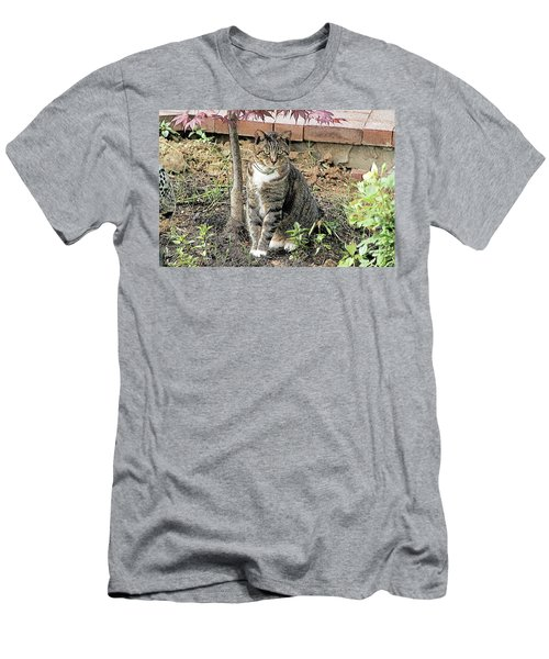 Tabby Under The Japanese Maple - Sketch Men's T-Shirt (Athletic Fit)