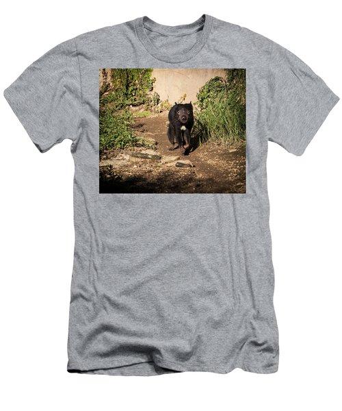 Tasmanian Devil - Canberra - Australia Men's T-Shirt (Athletic Fit)