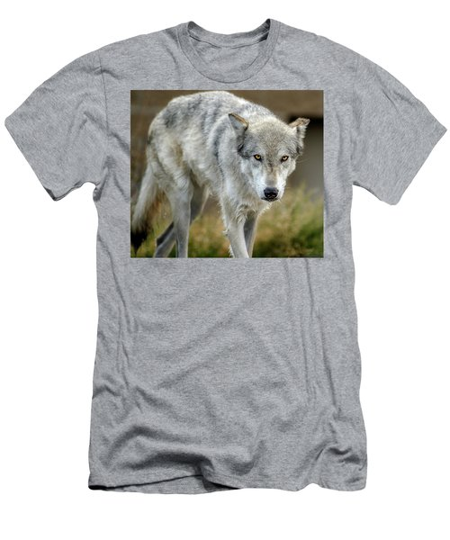 The Grey Wolf Shake Men's T-Shirt (Athletic Fit)