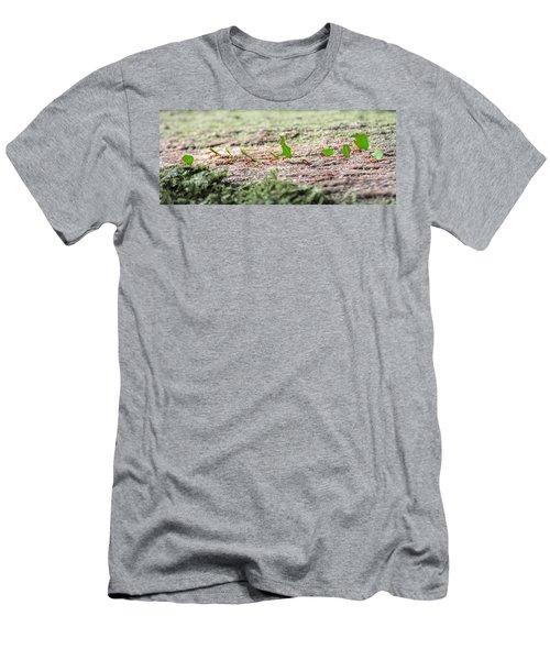 The Leaf Parade  Men's T-Shirt (Slim Fit) by Betsy Knapp