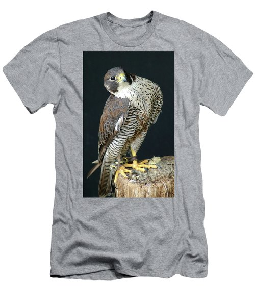The Proud Falcon Men's T-Shirt (Athletic Fit)