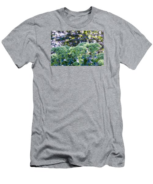The Sedum Forest Men's T-Shirt (Athletic Fit)
