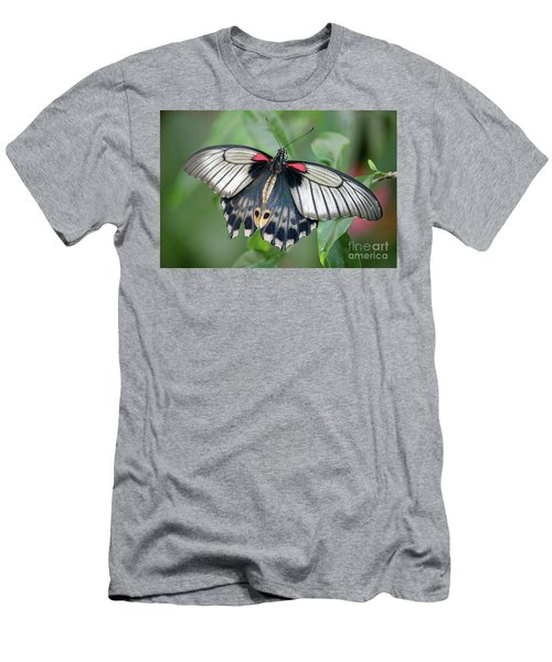 Tropical Butterfly Men's T-Shirt (Athletic Fit)