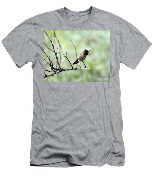 Trumpeting Hummingbird Men's T-Shirt (Athletic Fit)