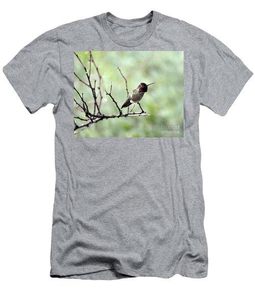 Trumpeting Hummingbird Men's T-Shirt (Athletic Fit)