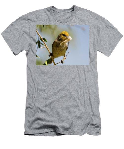 Verdin Building A Nest Men's T-Shirt (Athletic Fit)