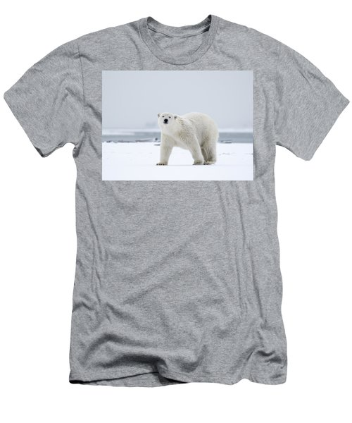 Watchful In The Arctic Men's T-Shirt (Athletic Fit)