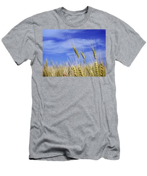 Wheat Trio Men's T-Shirt (Slim Fit) by Keith Armstrong