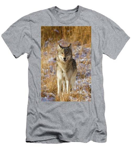 Wild Wolf Portrait Men's T-Shirt (Athletic Fit)
