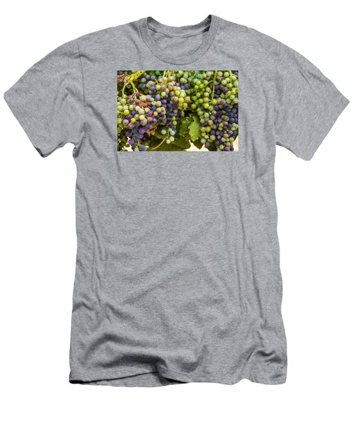 Wine Grapes On The Vine Men's T-Shirt (Athletic Fit)