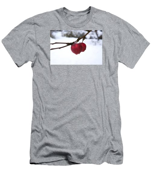Winter Apples Men's T-Shirt (Slim Fit) by Ellery Russell