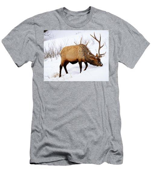 Winter Bull Men's T-Shirt (Slim Fit) by Greg Norrell
