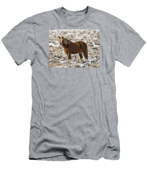 Winter Stallion Men's T-Shirt (Slim Fit) by Mitch Shindelbower