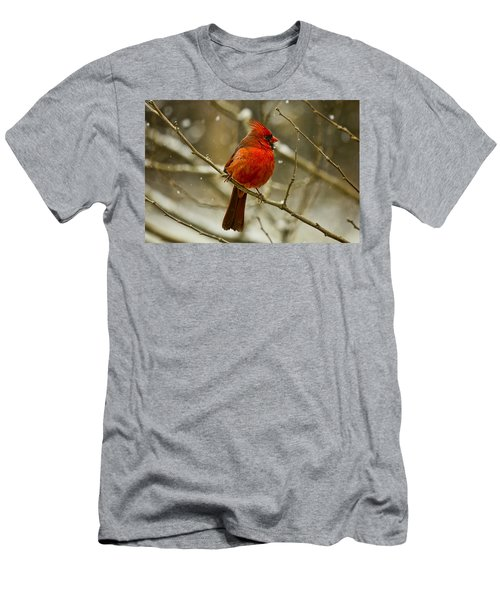 Wintry Cardinal Men's T-Shirt (Athletic Fit)