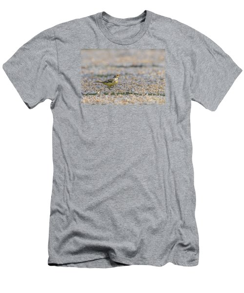 Yellow Crowned Wagtail Juvenile Men's T-Shirt (Slim Fit) by Jivko Nakev