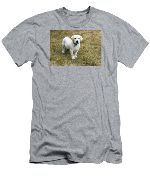 Yellow Labrador Puppy At Wanting To Play. Men's T-Shirt (Athletic Fit)