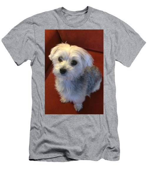 Yorkshire Terrier Men's T-Shirt (Slim Fit) by Robin Regan